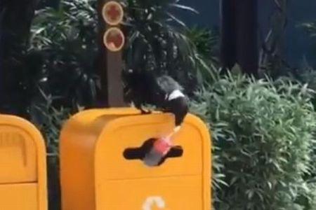 カラスの清掃員?ペットボトルを見事、ゴミ箱の穴に入れる動画が話題に