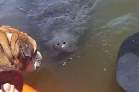 水面に突然、2つの鼻の穴、不思議な生物に興味を示すワンコの反応がユニーク