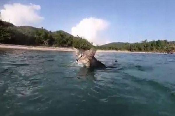 すごい!海の中もスイスイ、飼い主と一緒に泳ぐ子猫の動画が可愛い