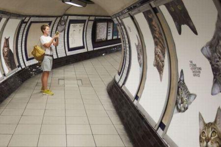 イギリスの地下鉄の広告が「ネコ」一色に変身、その理由とは?