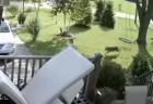 恐怖!住宅街で5歳の女の子が、危うく野生のコヨーテに襲われそうに【動画】