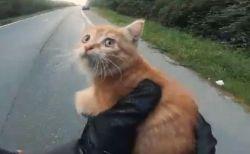 道路の真ん中に子猫が!気づいた2人の男性が救う動画が話題に