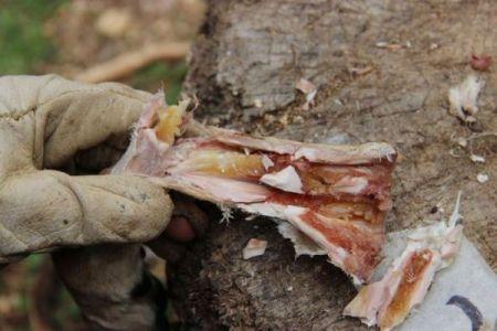 40万年前の人類はすでに食料を保存する知識を身につけていた:テルアビブ大学