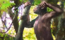 ドイツで発見された類人猿の化石が二足歩行の起源を物語る