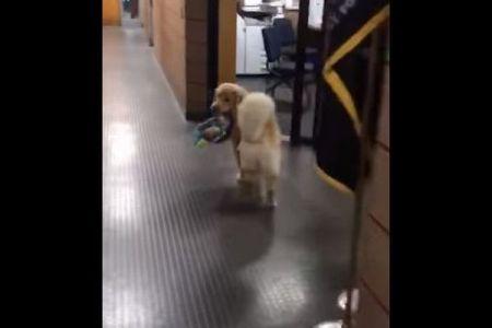 チャリティで配るおもちゃをこっそり盗んでいたのは、警察署にいるワンコだった