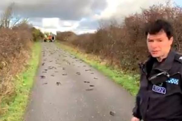 イギリスで数百羽のムクドリが道路に沿って死亡、原因は不明のまま