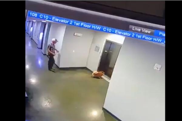 エレベーターの扉にリードを挟まれた子犬、窒息前に間一髪で救われる【動画】