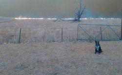 オーストラリアで羊たちを誘導したワンコ、迫る山林火災の炎から守りぬく