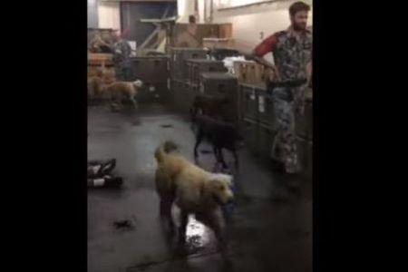 豪海軍が山林火災で避難したペットも収容、艦内が動物たちの保護施設に変身