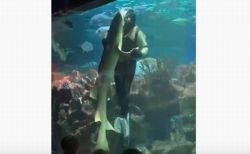 ロシアの水族館でダイバーがサメとダンス、垂直に回転する姿に来館者もびっくり