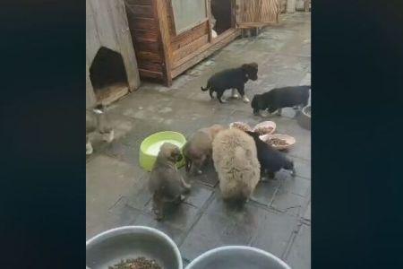 武漢に残されたペットは5万匹?餓死の危険性があると活動家が警鐘を鳴らす
