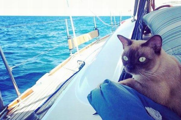 船で旅をするのが大好き!生まれてからほとんど海の上で暮らす猫が話題に