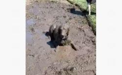 泥だらけ最高!全身をこすりつけて楽しむワンコがユニーク
