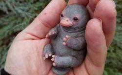 可愛らしい「カモノハシ」の赤ちゃん、フェイクと分かっても多くの人が賞賛