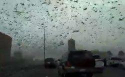 今度は中東!バーレーンに巨大なバッタの群れが襲来、空を覆い尽くす【動画】
