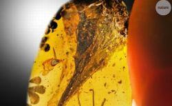 超ミニサイズの恐竜か?琥珀に閉じ込められた9900万年前の化石を発見