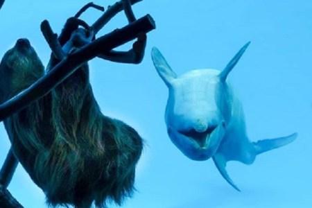 イルカも興奮!休園中の水族館を散歩するナマケモノの姿に癒される