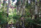 アマゾンの先住民も新型コロナに感染、影響が拡大し消滅する危機も