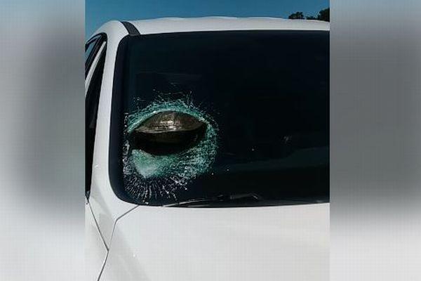 まるでマリオカート!走行中の車にカメが激突、フロントガラスに突き刺さる