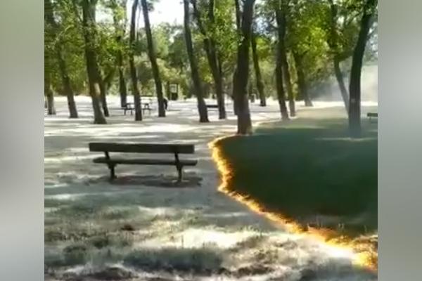 【動画】公園に広がる炎、草木だけ焼かれないのが不思議