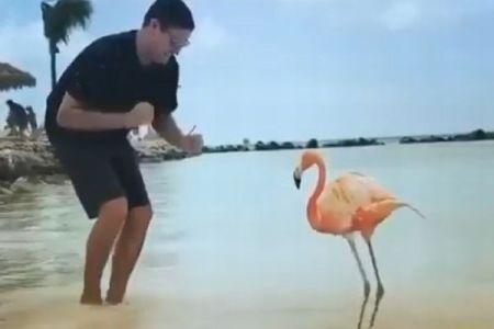 カリブ海のビーチ、フラミンゴとダンスをする男性のユニーク動画