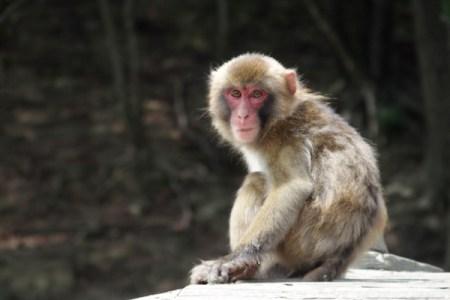 サルの群れが新型コロナの血液サンプルを強奪【インド】