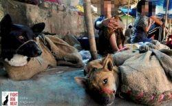 インドの州で犬肉の販売・輸入が禁止へ、動物愛護団体の働きかけにより