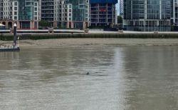ロンドンの川にサメ?水面から突き出た背ビレのようなものを人々が目撃