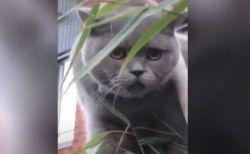 「ミャー・ニャコ、ニャコ・ニャコ…」オランダで撮影されたネコの鳴き声がユニーク