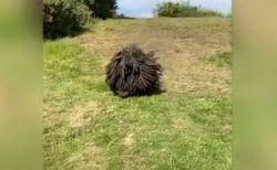 黒い生き物が斜面を降りてきた!動画に映った意外な動物の正体とは?