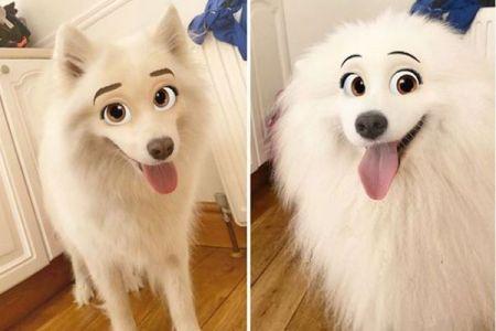 ペットの顔をディズニー風にアレンジ、アプリの新しい機能が面白い