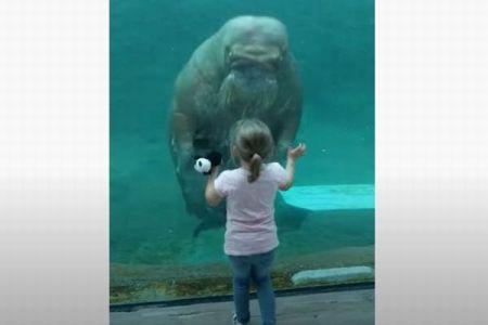 セイウチが少女に向かって接近、ガラス越しにキスしようとする姿にびっくり