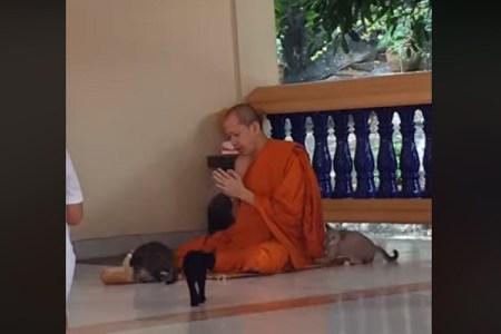 修行の成果か?かわいい子猫の誘惑に負けない僧侶の姿が200万再生