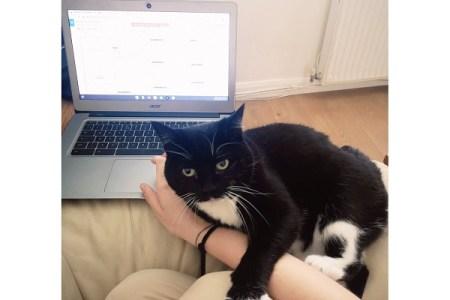リモートワーカー必見!猫の邪魔を阻止するかわいらしい方法