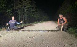 米のフロリダ州で巨大なヘビを捕獲、州の記録を塗り替える【動画】