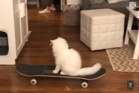 スケボーをするネコが登場、自分で乗り方を覚える【動画】