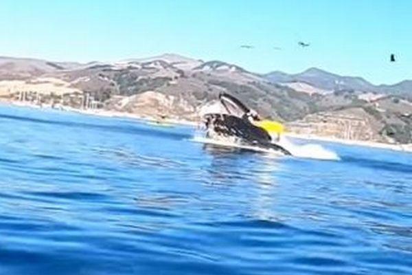 カヤックに乗っていた2人の女性、クジラに飲み込まれそうになる瞬間の映像
