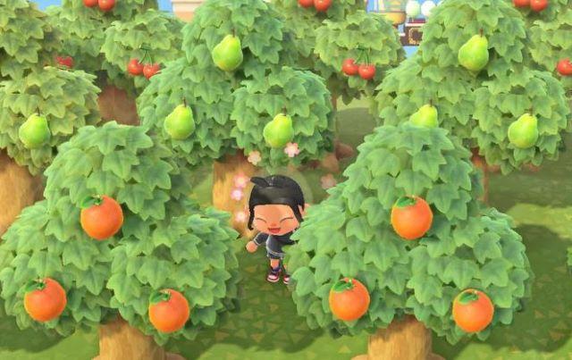 あつ 森 果物 あつ森 果樹園...