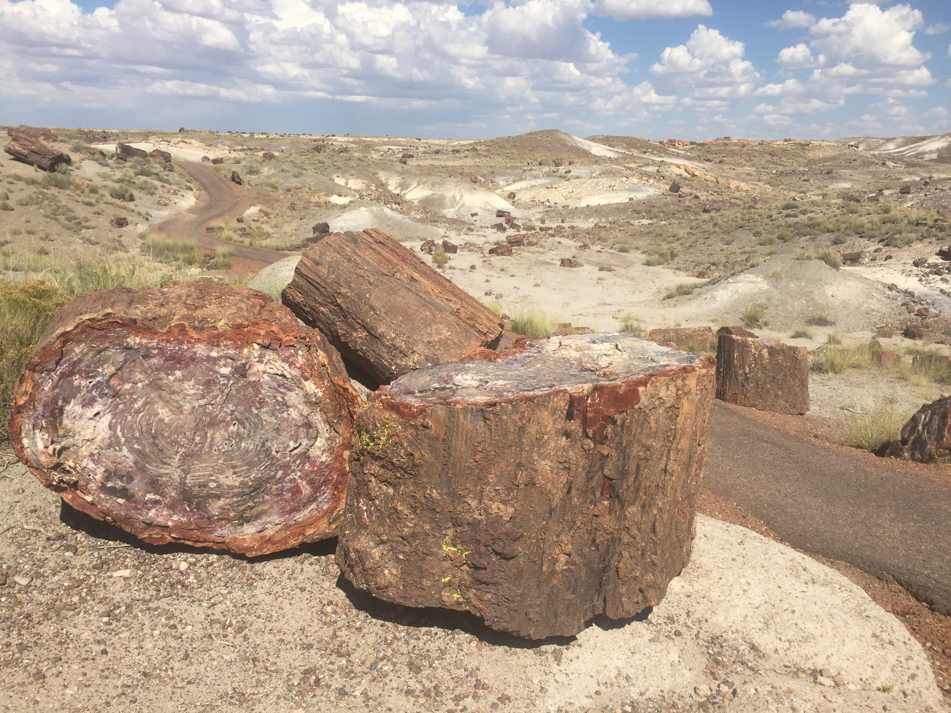 PETRIFIED FOREST: The Ultimate Road Trip Stop