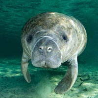 10 Endangered Species Success Stories of South Florida