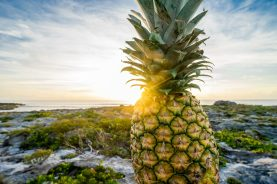 Pineapple, Dylanna Fisher, Switching , Fruit, Music, Styles, sunshine