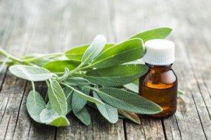 Sage for improving body odor