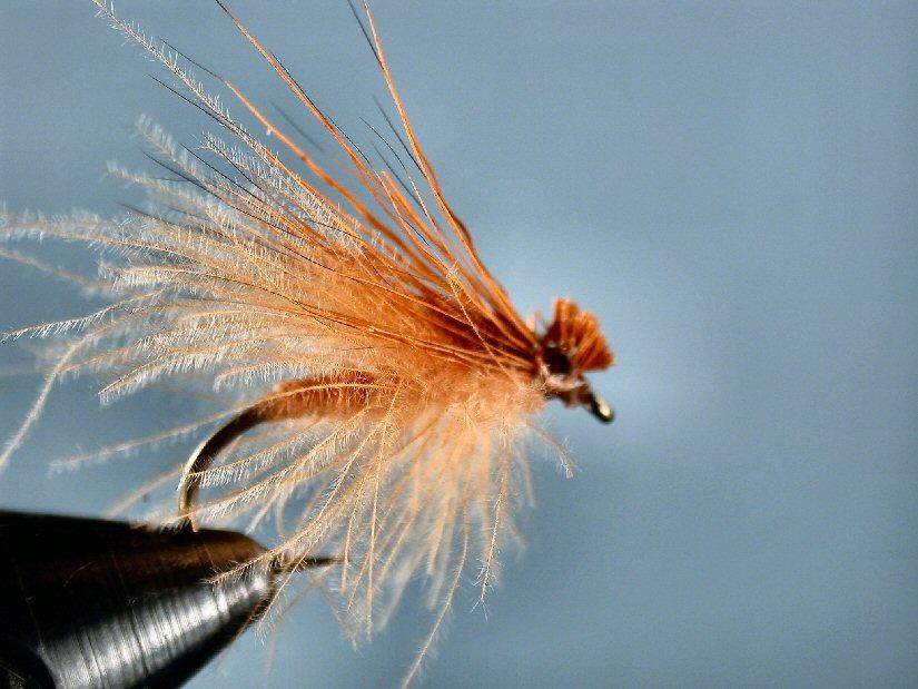 October Caddis (EHC w/ CDC)