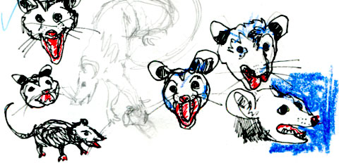 possum-sketches