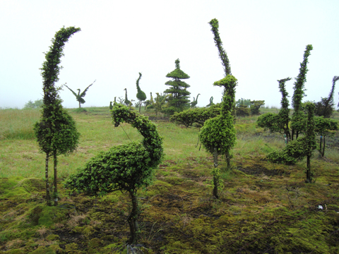 22_topiary kumamoto