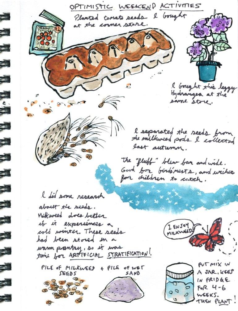 My pandemic diary page 23 tomato seeds, milkweed seeds