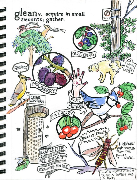 My Pandemic Diary! Part 2 Glean page of drawing about harvesting fruit in the city