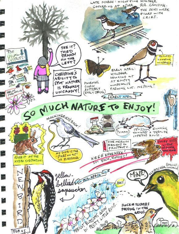 My Pandemic Diary 2 page 49 more spring nature drawings