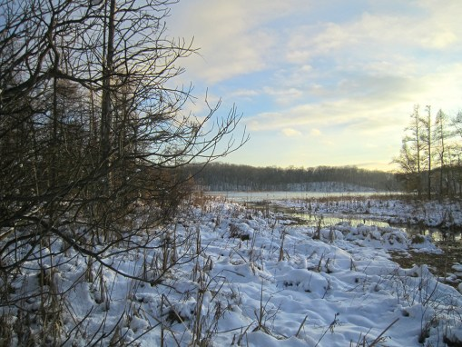 Carter Lake Preserve