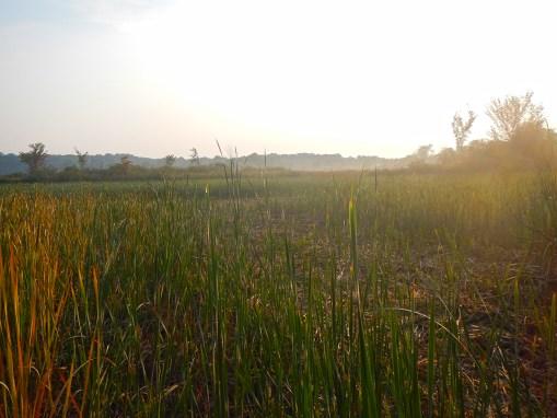 Marc's Marsh Preserve